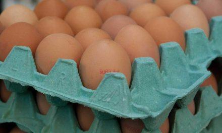 41% essen durch den Fibronil-Skandal weniger Eier als zuvor