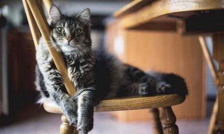 51% finden Möbel für Tiere gut