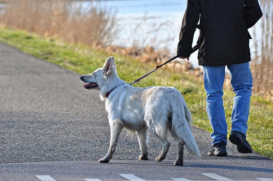 73% befürworten Einführung eines Hundeführerscheines für alle Halter