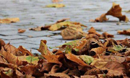 56% freuen sich auf den Herbst