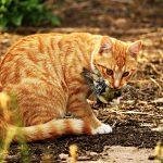 46% befürworten weiterhin unkontrollierten Freigang für Hauskatzen