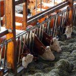 49% lehnen Steuer auf Fleischprodukte für tiergerechte Haltungsverfahren ab