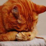 54% befürworten Meldepflicht für Corona-Infektion von Haustieren