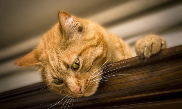 64% befürworten Haustier-Führerschein