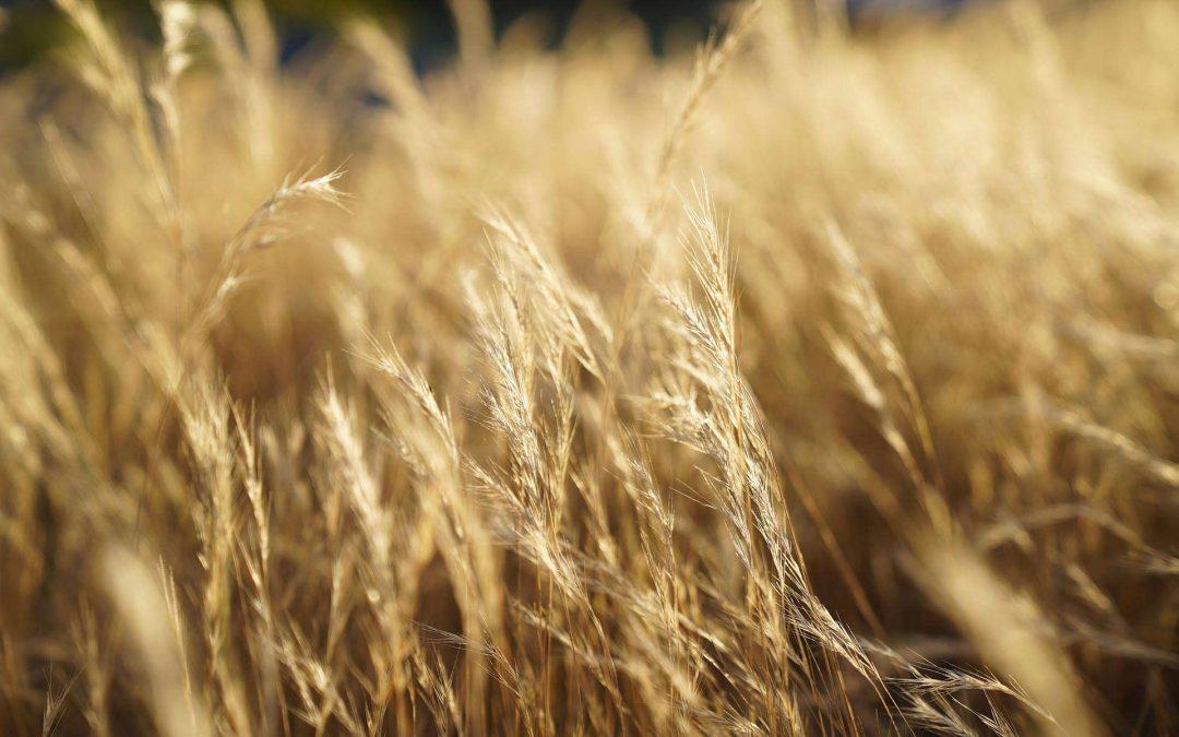 67% befürworten Milliardenhilfe für Bauern